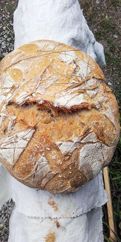 Pain au foin - Pains régulier de la boulangerie artisanale BARA'LO